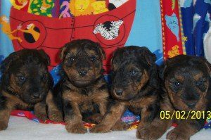 Reserving these puppies now!